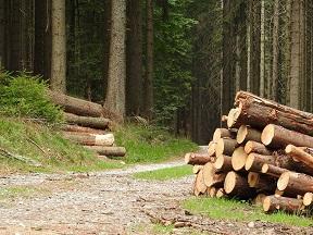 lesnicke-prace